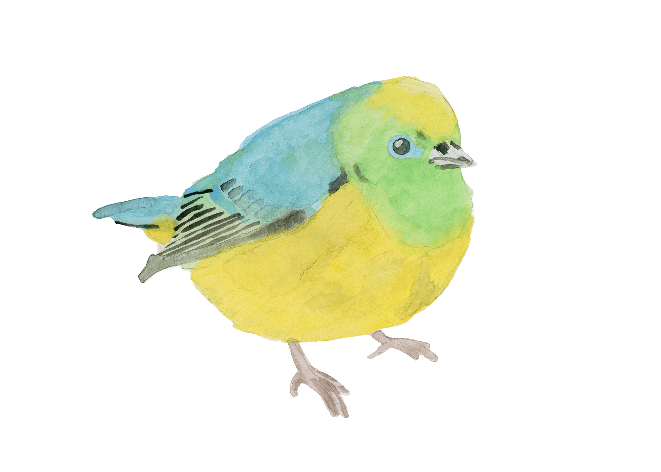 cute bird watercolor print free print download