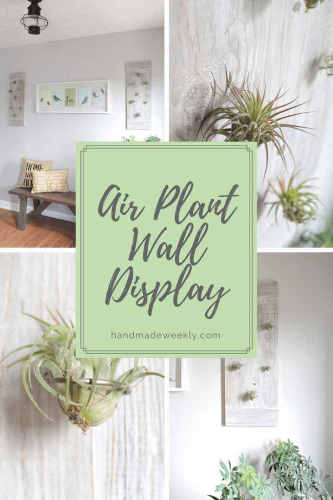 Diy Air Plant Wall Display Handmade Weekly