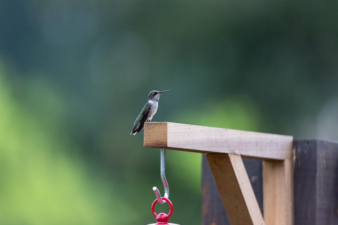 DIY Bird Feeder Holder