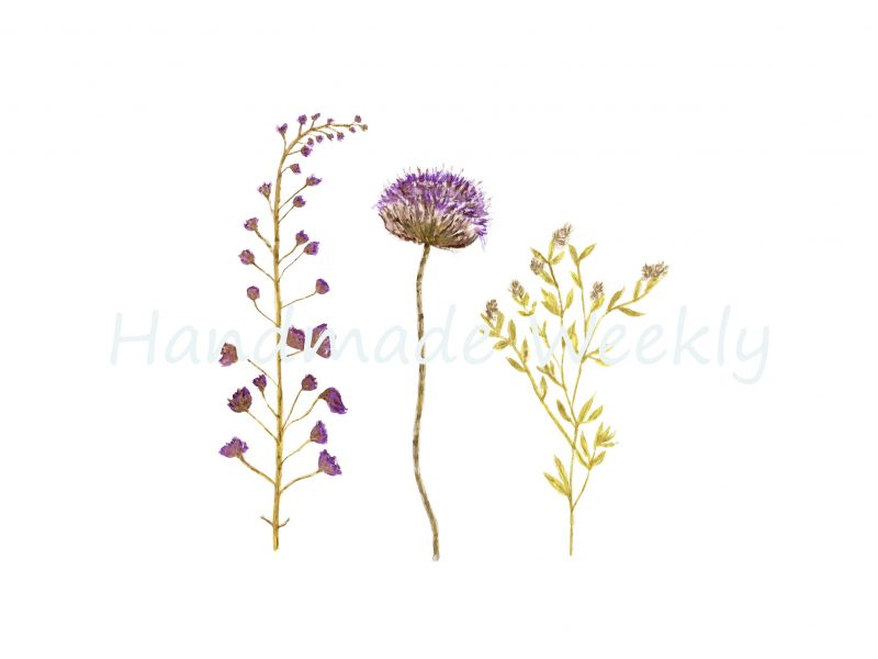 Free wildflower botanical printables