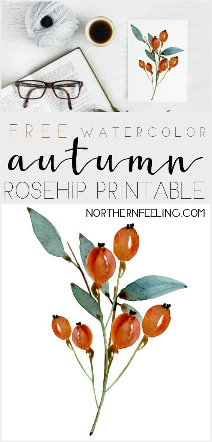 Rosehip watercolor printable