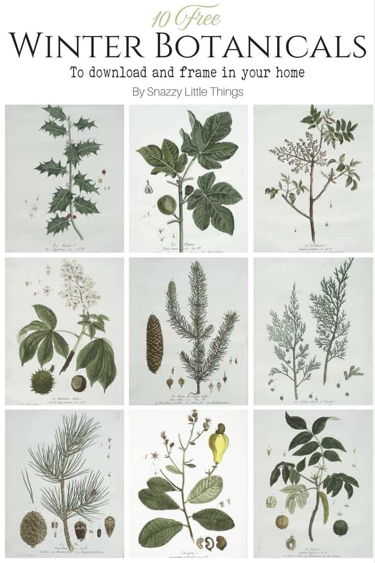 Free winter botanical prints